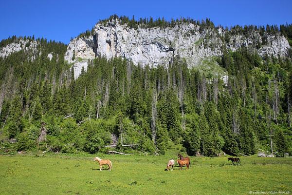 Erinnert ein bisschen an Kanada - happy horses :)