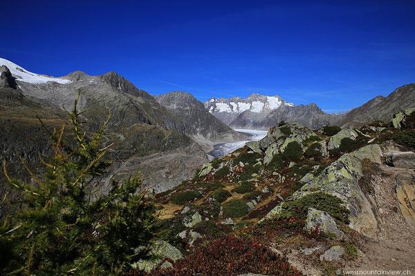 Moosfluh - Aletschgletscher
