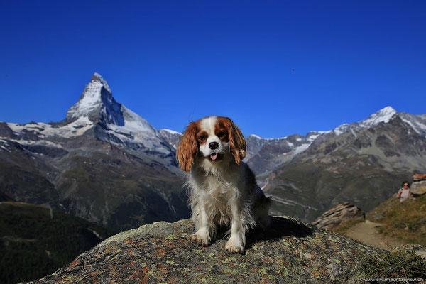 Charly hat aber Lust auf Wandern - und wir auch :)