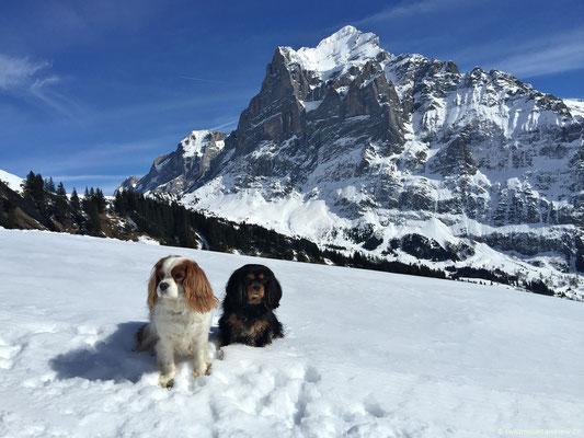 Charly und Jucy vor dem Wetterhorn.
