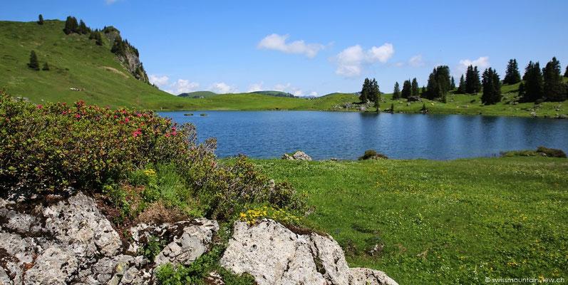 Die Alpenrosen blühen, weiter oben hat es noch Schneeflecken am Berg.