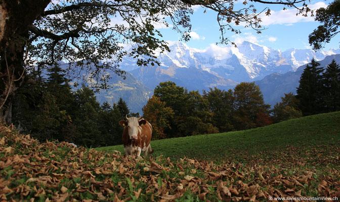 Spaziergang im Amisbühl