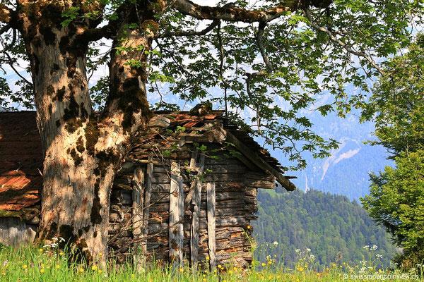 Waldegg - Amisbühl