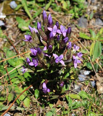 Vorbei an wunderschönen Alpenblumen.