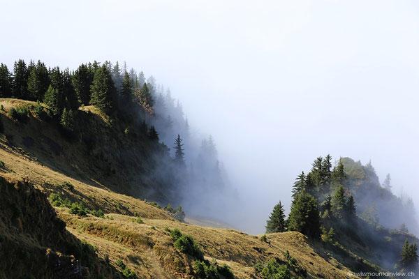 Ein bisschen weiter unten schleicht der Nebel um die Baumwipfel