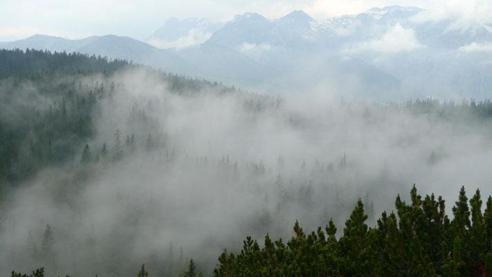 20.6.14, Nebel ziehen