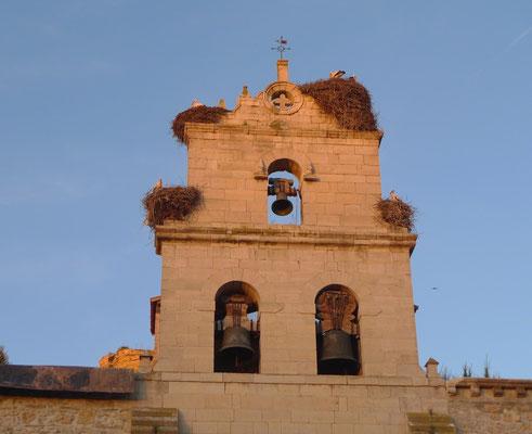 Belorado, die Stadt der Störche