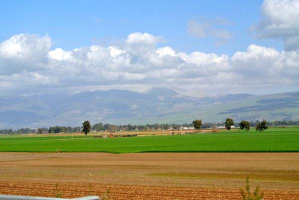 Im Hintergrund die Golanhöhen