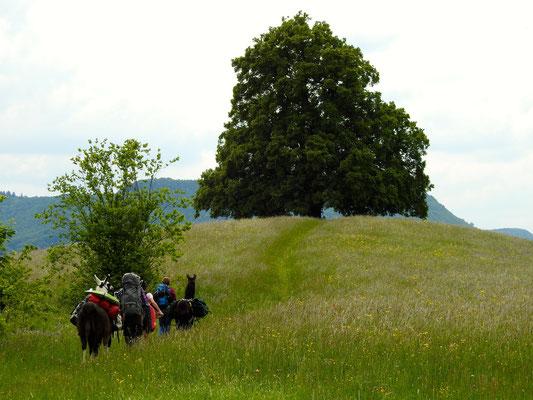 Friedenslinde bei Bronnweiler