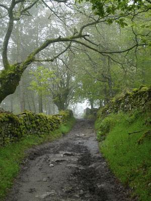 Galizische Hohlwege