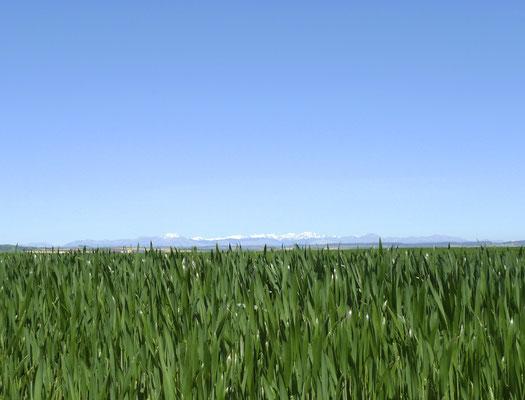 Immer wieder ein Blick auf das kantabrische Gebirge