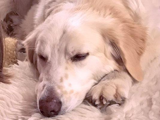 Hunde und Katzen sind treue Familienmitglieder, die in schweren Zeiten, bei schweren Krankheiten, oder im Alter besondere Betreuung brauchen.