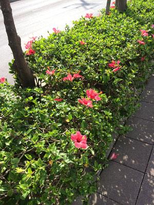沖縄ではもちろんハイビスカス!