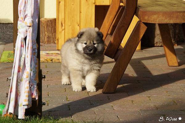 Ich bin schon ein grooßer Hund !