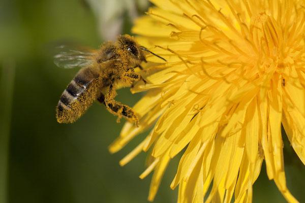 Honig Verkauf