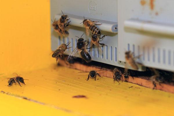 Schweizer Honig