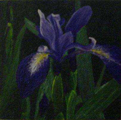 """""""Iris"""" Tempera auf Holzkasten, lackiert, 22x22 verkauft"""