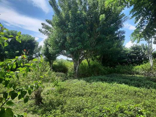 Bukit land for sale