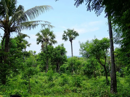 Land for sale in Seraya, East Bali