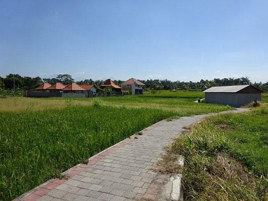 Ubud land for sale