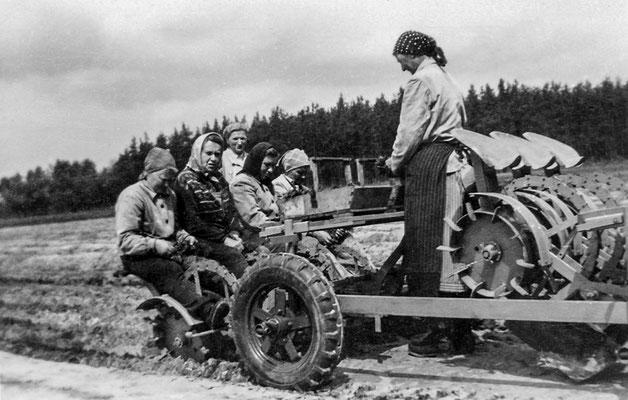 (391) Feldarbeit, um 1950