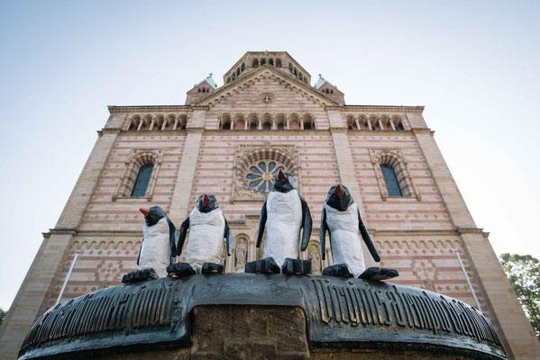 Pinguine in Speyer - Augenblickbewahrer - Martin Dietrich - Fotograf in Heidelberg