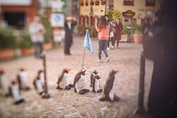 Pinguine in Heidelberg - Augenblickbewahrer - Martin Dietrich - Fotograf in Heidelberg
