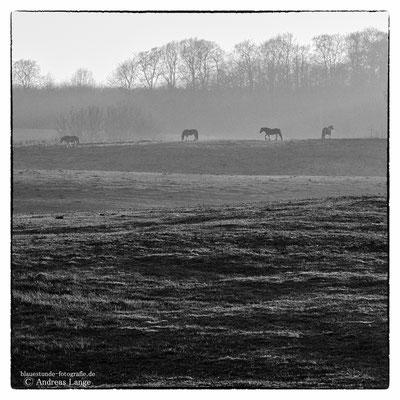 Pferdekoppel Jasmund
