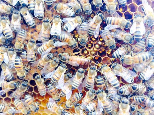 ハニカム構造(ハチの巣の構造)が綺麗!