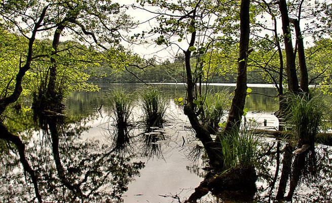 Sumpflandschaften auf Rügen II