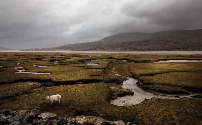 Seilebost, Salt Flats, Harris