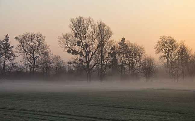 Unterwegs am frühen Morgen I