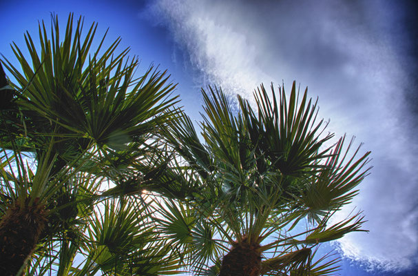 unterm Himmel Palmen