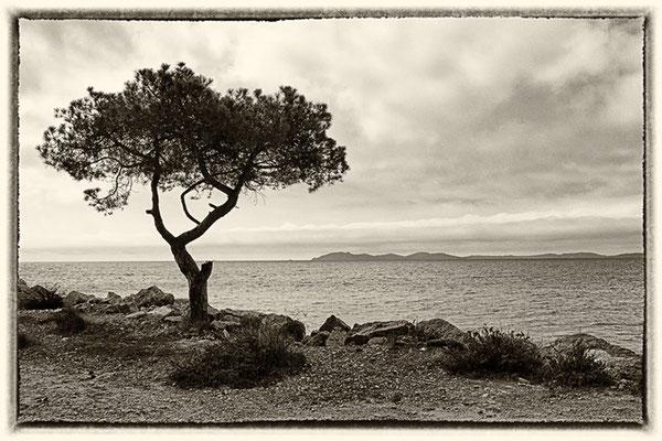 Die Pinie und das Meer