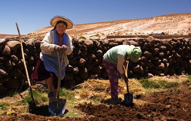 Feldarbeit in San Augustin