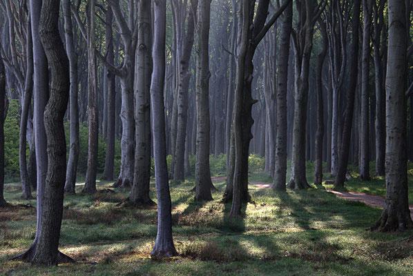 Geisterwald bei Nienhagen 10