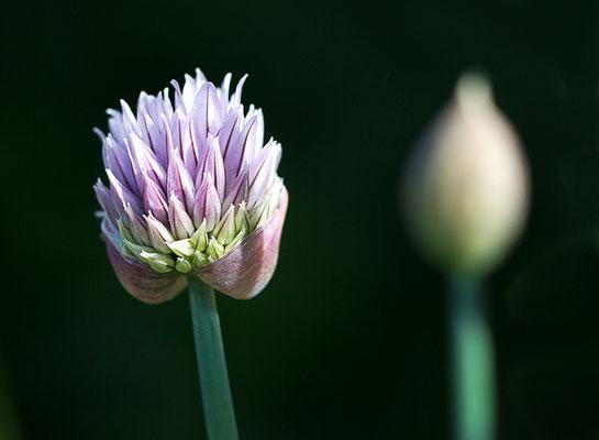 nicht nur Blumen blühen