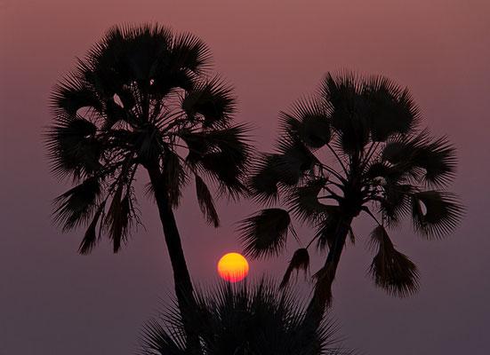 Die Palmen der Palmwag-Lodge 3