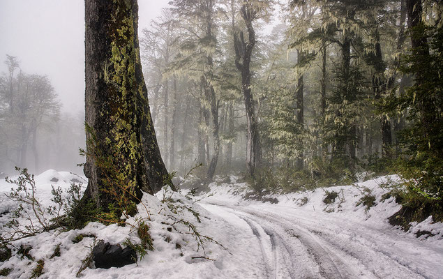 Waldgebiet des Vulkans Mocho
