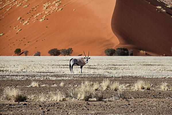Die Dünen im Namib Naukluft Park 5