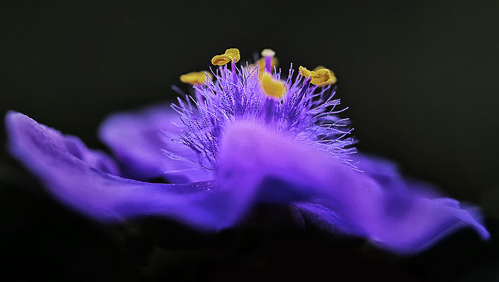 Schwebendes Violett