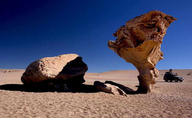 Arbol de Piedra I