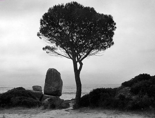 un pina da solo
