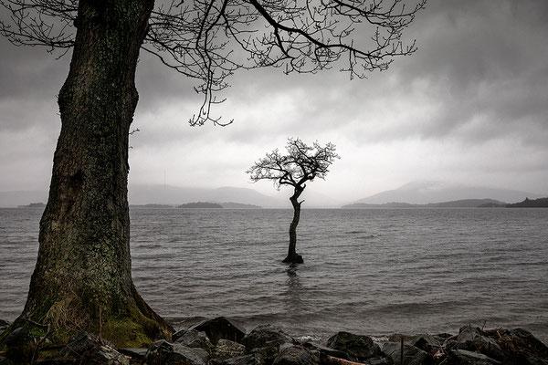 The Lone Tree, Milarrochy