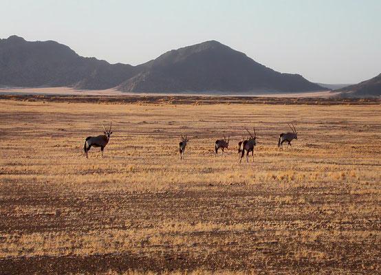 Namib Naukluft IV