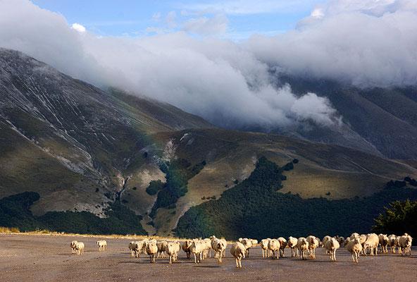 Die Herde....