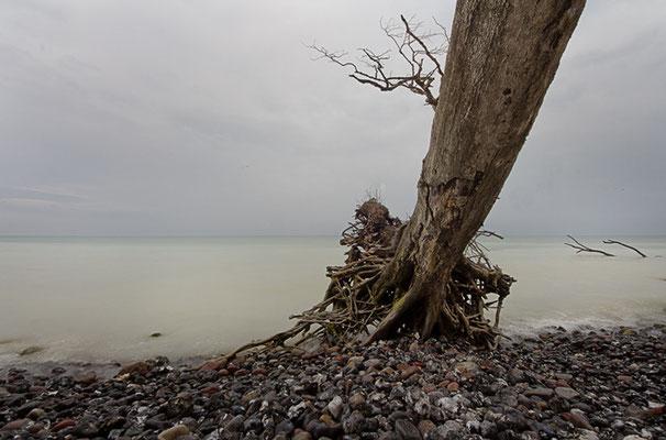Impressionen von Rügens Kreideküste IX