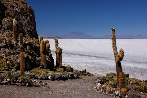 Isla Incahuasi IV