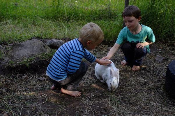 Kaninchen streicheln in Bullerbü