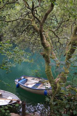 Ein stiller See. Darauf liegt ein kleines Ruderboot. Im Vordergrund steht ruhig ein Baum.